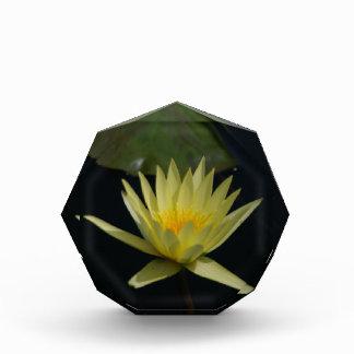 Yellow Lotus Waterlily Award