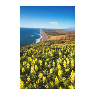 Yellow Lupine Above Point Reyes Beach At Point Canvas Print