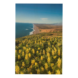 Yellow Lupine Above Point Reyes Beach At Point Wood Print