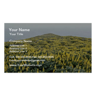 Yellow Lupine And Pacific, Tomales Point flowers Double-Sided Standard Business Cards (Pack Of 100)