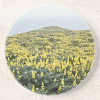 Yellow Lupine And Pacific, Tomales Point flowers Coaster