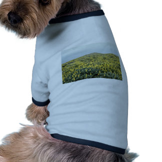Yellow Lupine And Pacific, Tomales Point flowers Doggie T-shirt