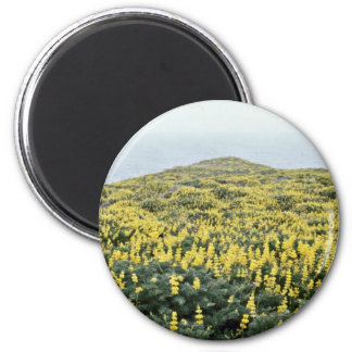 Yellow Lupine And Pacific, Tomales Point flowers Refrigerator Magnet