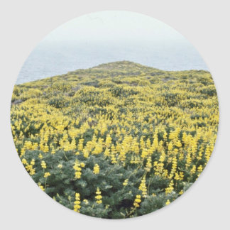 Yellow Lupine And Pacific, Tomales Point flowers Stickers