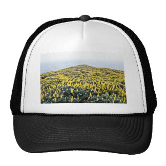 Yellow Lupine And Pacific, Tomales Point Mesh Hats