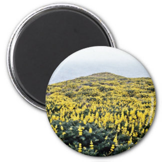 Yellow Lupine And Pacific, Tomales Point Refrigerator Magnets