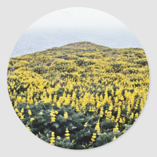 Yellow Lupine And Pacific, Tomales Point Round Stickers