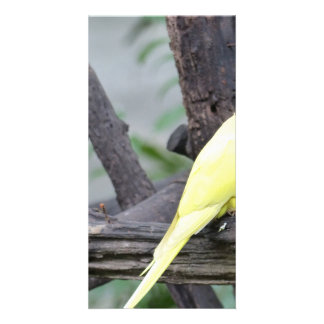 Yellow Lutino Ring Necked Parakeet in a tree Card