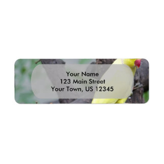 Yellow Lutino Ring Necked Parakeet in a tree Label