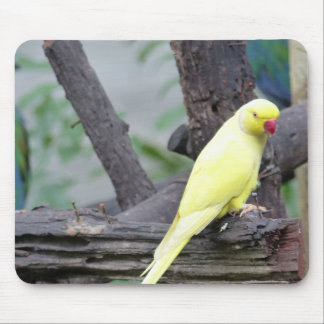 Yellow Lutino Ring Necked Parakeet in a tree Mouse Pad