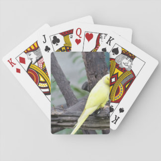 Yellow Lutino Ring Necked Parakeet in a tree Playing Cards