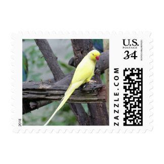 Yellow Lutino Ring Necked Parakeet in a tree Postage Stamp