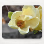 Yellow Magnolia Flower Mouse Pads