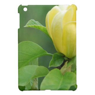 yellow-magnolia.jpg