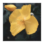 Yellow Mallow Oil On 24 Inch Dark Green Canvas Gallery Wrapped Canvas