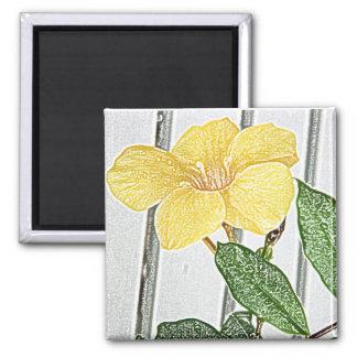 Yellow mandevilla magnet