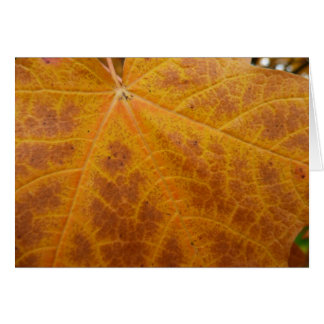 Yellow Maple Leaf Autumn Abstract Nature Card