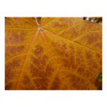 Yellow Maple Leaf Autumn Abstract Nature Poster