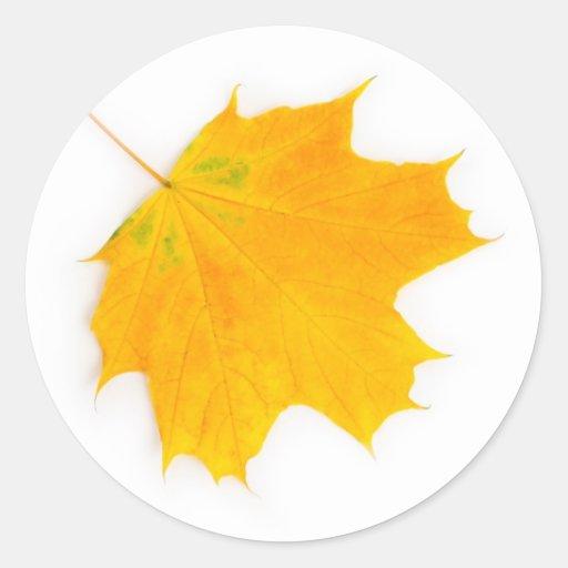 Yellow maple leaf round sticker