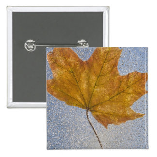 Yellow Maple Leaf Under Water Pinback Button