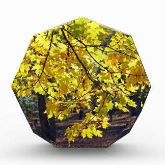 Yellow maple leaves acrylic award