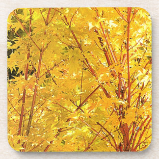 Yellow Maple Leaves Coasters
