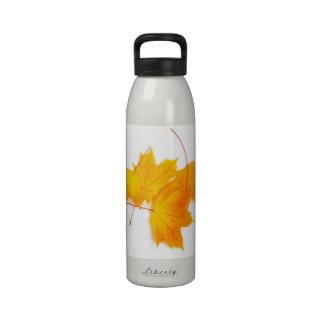 Yellow maple leaves water bottle