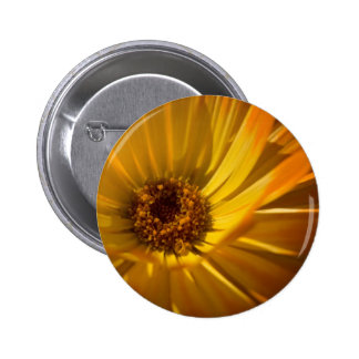 Yellow Marigold Gelbe Ringelblume Pinback Buttons