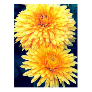 Yellow Marigold Postcard