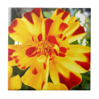 Yellow Marigold With Red Flecks Summer Flower Love Tile