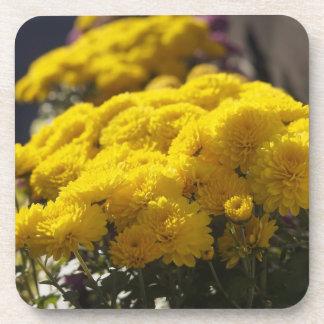 Yellow marigolds bask in sunlight coaster