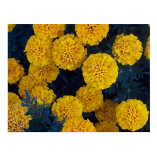 Yellow Marigolds Postcards