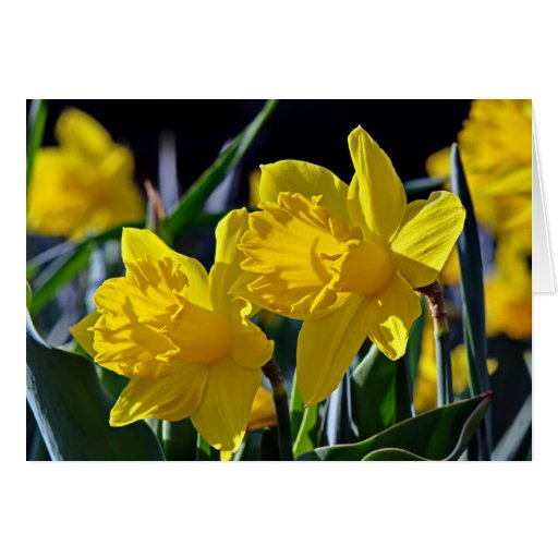Yellow Mates Greeting Card