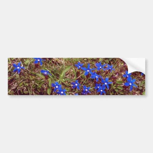 Yellow Meadow Gentian flowers Car Bumper Sticker