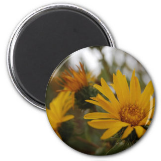 Yellow Milkweed 2 Inch Round Magnet