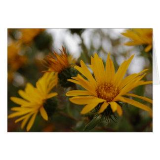 Yellow Milkweed Cards