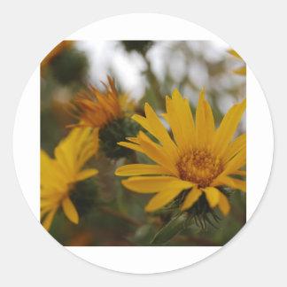 Yellow Milkweed Classic Round Sticker