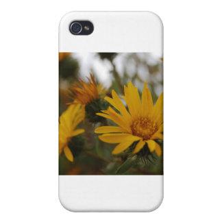 Yellow Milkweed iPhone 4 Cover