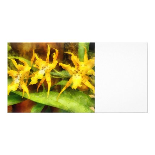 Yellow Miltassia Orchids Picture Card