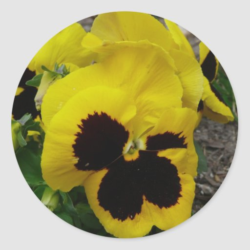 Yellow Mixed Pansy Round Stickers