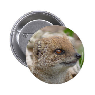 Yellow mongoose button