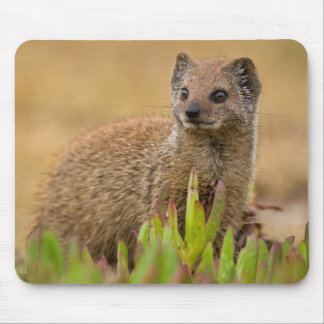 Yellow Mongoose Juvenile Amongst Figs, De Hoop Mouse Pad