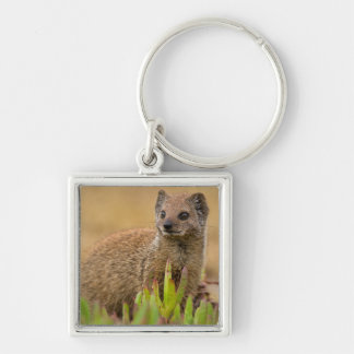 Yellow Mongoose Juvenile Amongst Figs, De Hoop Silver-Colored Square Keychain