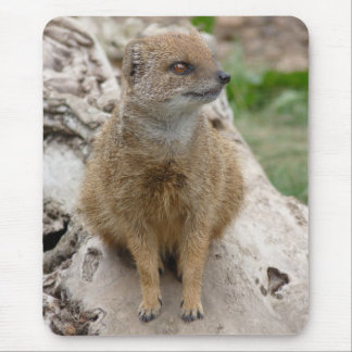 Yellow mongoose mouse pad