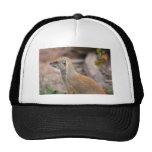 Yellow Mongoose Photograph Trucker Hats