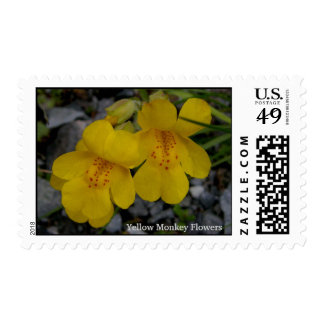 Yellow Monkey Flowers (Mimulus guttatus) Postage Stamp