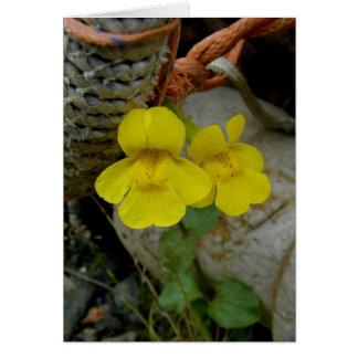 Yellow Monkey Flowers on Unalaska Island Card
