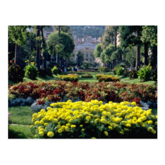 yellow Monte Carlo flowers Postcard