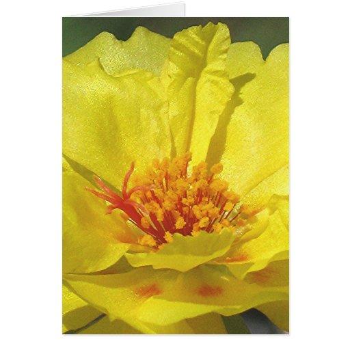 YELLOW MOSS ROSE greeting card