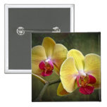 Yellow Moth Orchids - Phalaenopsis 2 Inch Square Button